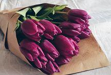 tulips lover