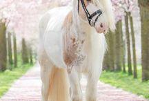 beutufull horses