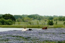 What I love about Texas!