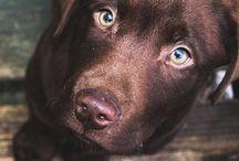 Fotografie hond