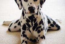 Puppy Love / I'm definitely a dog woman! / by K. Shardell Monique B.