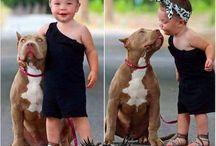 Animais e bichos de estimação Adoro