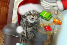 Happy Holidays with Baloo the Maine coon