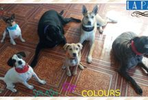 DOGS IN COLORS