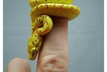 Snakes < 3