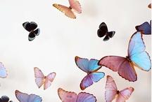 My favorite butterflies