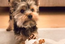 Rosewood Puppies / Rosewood's range of puppy products. Toys to chase, chew, comfort and snuggle.
