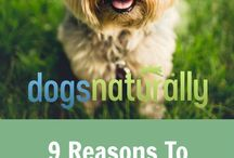 Benefits Of Coconut Oil For Dogs
