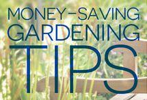 Gardens on a Budget / Money saving garden ideas