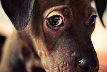 Kutya tekintet / A hűséges társ