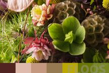 Range of Colour / We show some of the range of colour that FLOOS designers had chosen in their floral recipes.  You can view at http://www.floos.org