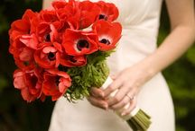 Flower: Anemones / by Rose of Sharon Floral Designs, Althea Wiles