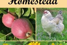 Start a Homestead