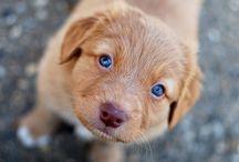 My future puppy...!