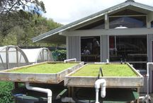 Plants Growing / Gardening, hydroponics, composting, greenhouses, storage boxes, lights for growing plants, aquaponics
