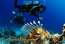 Sharm El Sheikh diving