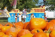 Fall Things To Do / Some great ideas for things to do in Greater Cincinnati!
