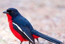Aves(Pajaros);Mamíferos;Reptiles;Anfibios Etc...