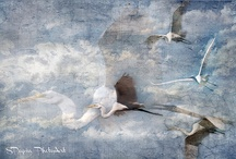 heron story