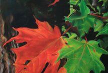 Autumn / The Season of Autumn