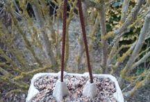 oiseaux / Boîte à oeufs vernis papier à l'extérieur. J'attache un cordon pour la suspendre dans l'arbre. Remplie de graisse et graines pour les petits oiseaux. Ils sont r