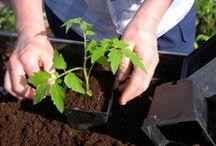 gardening/growing tips