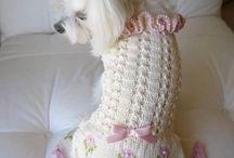 Dog knit