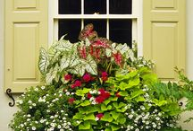 Window Boxes / by Kelly Lamb