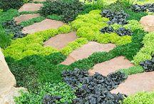 Plant Inspirations
