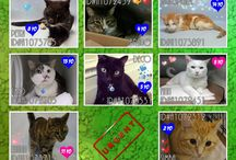 Daily lists for the beautiful so desperately needing homes...