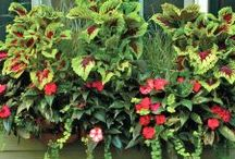 Window Boxes / Beautify windows, walls and railings using Window Box Planters. Choose from 4 sizes to best fit your space requirements.
