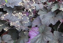 D - H Guide to Fall Annuals
