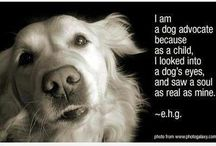 Dog <3 / by Heather Young