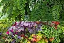 shade containers 7