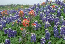 Texas / by Dionisia Munoz