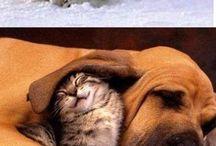 Zábavné obrázky zvířat