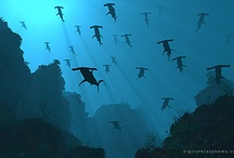 La Mer / Stuff about the ocean or water in general.  / by David Wertheimer II