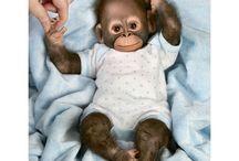Baby monkey dolls xx / I so love these baby monkey dolls / by Lesley Holloway