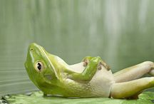 Froggy Things / All things frog and toad.
