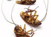 Kill cockroaches