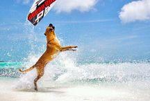 Kiting!