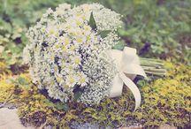 Blooms / by Ssssss C
