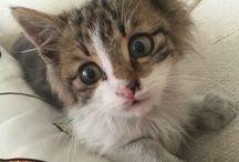 Cat / Pisi pisi