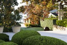 Topiary Planting
