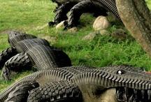 Tyre Gators