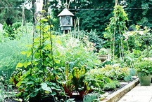 Gardening / I love flowers and last year I made a small vegetable garden , so I am looking for ideas