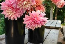 Minnesota Blooms / Nothing makes a home more inviting, or a wedding more exciting than a bouquet of beautiful, fresh, Minnesota Grown flowers. Use this board to find inspiration for your next arrangement, and don't forget to shop local! Find local farmers markets, and all your Minnesota Grown florist and fresh cut flower options in our free Directory! www.minnesotagrown.com