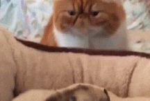 kucingnya ngegemesin mukanya