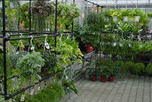 Kamerplanten   Plantes d'Intérieur