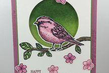 "Cards - ""Best Birds"""